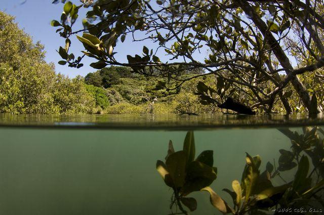 Matapouri Estuary